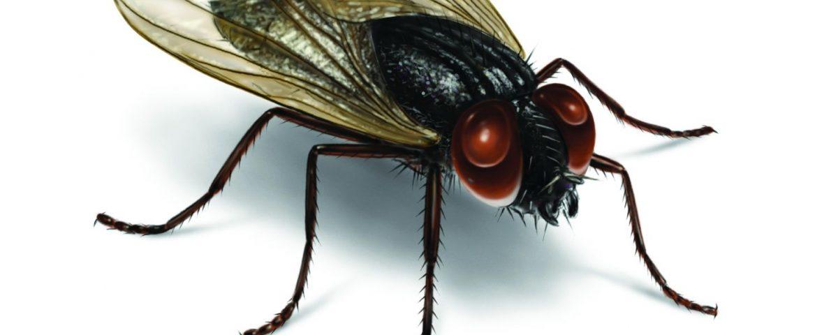sinek ilaçlama